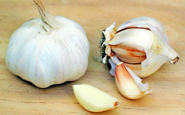 Treatment of opisthorchiasis with garlic