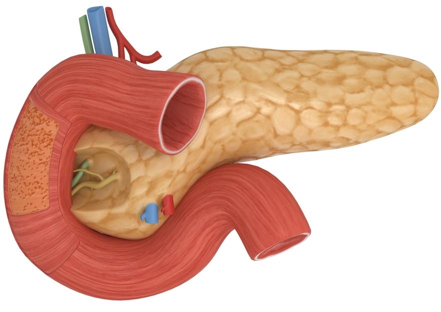 Wie sieht die Bauchspeicheldrüse auf dem Foto aus? - Treat simply