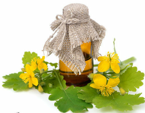 How to drink celandine with polyps?