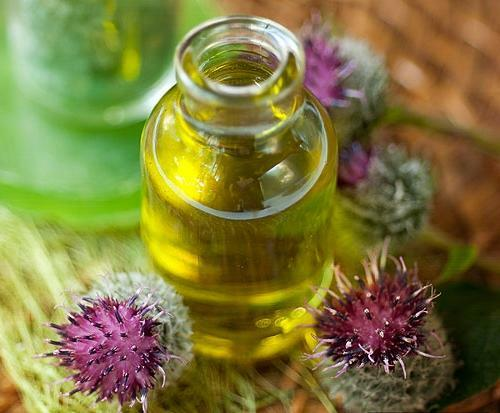 Burdock oil is a part of the spray