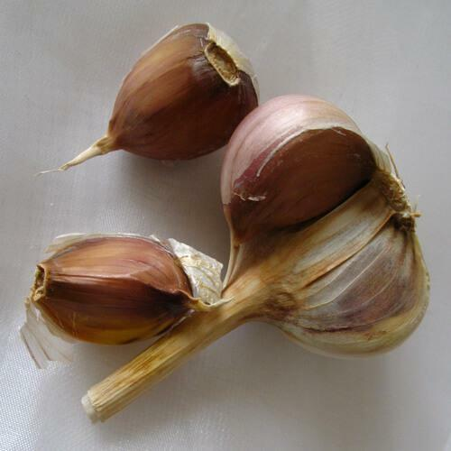 Garlic cloves from pain in the ear