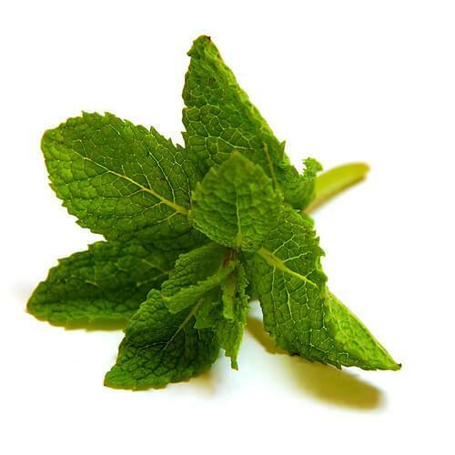 Mint relieves pain in the ears